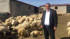 Küçükbaş hayvan yetiştiricileri CHP Milletvekili Gürer'e dert yandı…