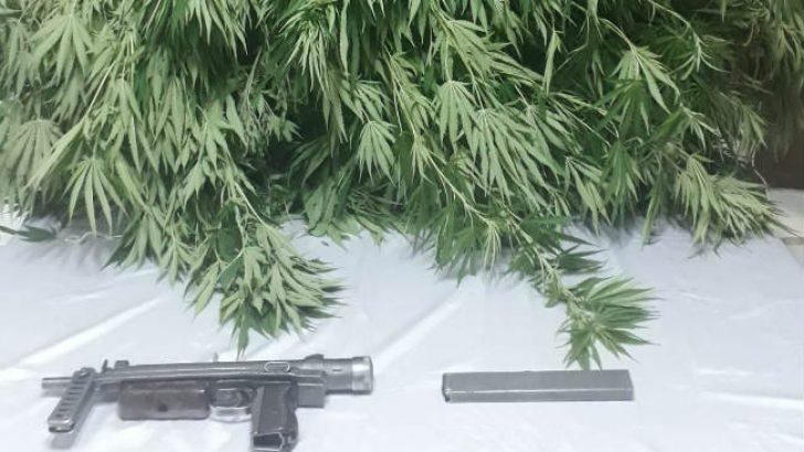 Malatya'da Kök Kenevir Bitkisi ve CZ-25  Marka Makinalı Tabanca Ele Geçirildi