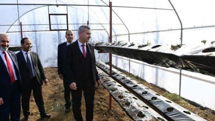 'Yeşil Gıda Seracılık' alanında topraksız çilek üretimine başlandı.